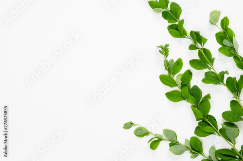 Obraz Barberry branch with green leaves on white background. Minimal flat lay style flower composition, top view, copy space. - fototapety do salonu