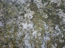 Yellow Moss Mix Limestone Texture On Background