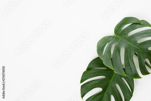 Canvas Prints Floral Tropical leaves Monstera on white background. Flat lay, top view