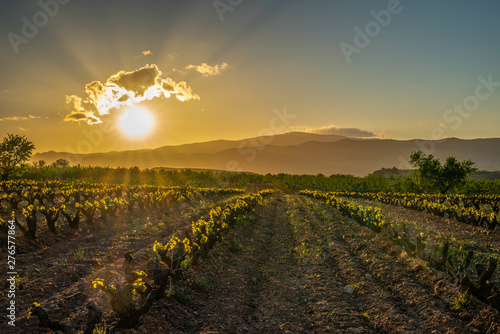 Stickers pour porte Fleur Panoramic view of a vineyard in Spain during a spring day with backlight and blue sky - Image