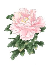 Panel Szklany Peonie Digital hand painted flower watercolor sweet pink Peony flower with dark green leaves, Isolated image.