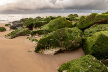Green Algae On The Sandy Beach With The Atlantic Ocean In The Background