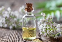 A Bottle Of Valerian Essential Oil And Fresh Plant