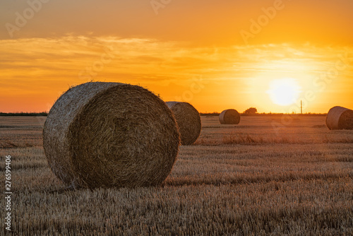 Foto auf Leinwand Dunkelbraun haystacks lie on a field harvesting