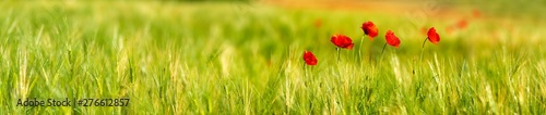 Printed kitchen splashbacks Meadow field of poppies