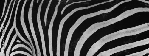beautiful zebra skin close up , pattern concept - 276613676