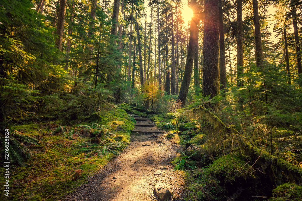 Fototapety, obrazy: Olympic National Forest, Olympic National Park
