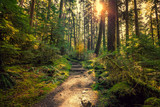 Fototapeta Las - Olympic National Forest, Olympic National Park