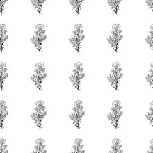 Seamless Pattern With Wildflowers On White Background For Print Design. Print, Design Element. Seamless Floral Pattern. Fashion Vector Illustration. Summer Background