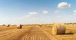 haystacks lie on a field harvesting