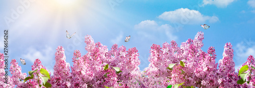 Tuinposter Natuur Almond blossoms over blurred nature background