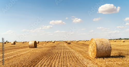 Staande foto Cultuur haystacks lie on a field harvesting