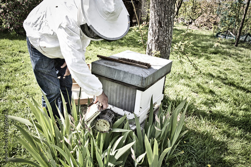Fotografía Commercial beekeeper at Work, Cleaning and Inspecting Hive