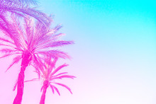 Silhouette Of Palm Trees With A Bright Summer Gradient On A Bright Blue Background Of The Summer Sky. Tropic, Vacation And Travel Concept