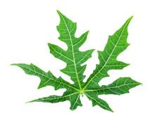 Chaya Leaf (Cnidoscolus Aconitifolius Or Cnidoscolus Chayamansa McVaugh) Isolated On White Background