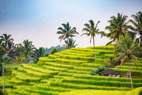 Foto auf Gartenposter Reisfelder Rice fields in Jatiluwih, Bali, Indonesia