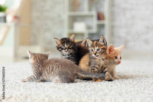 Cadres-photo bureau Chat Cute funny kittens at home