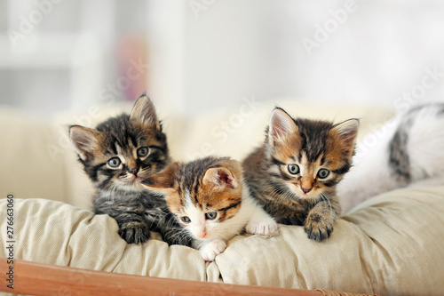 Fototapeta Cute funny kittens at home obraz