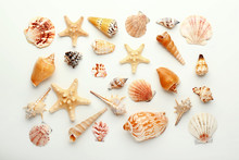 Many Beautiful Sea Shells On W...