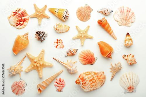 Obraz na plátně  Many beautiful sea shells on white background, top view
