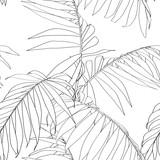 Natura wzór. Ręcznie rysowane tropikalny lato tło: czarne liście palmy, grafika liniowa. Białe tło. - 276673030