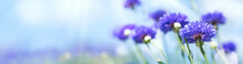 Summer Panorama Of Cornflowers...