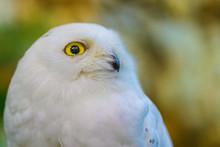 Close Up To A Portrait (head S...