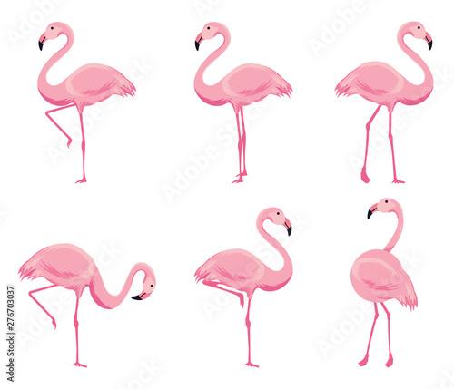 Canvas Prints Cartoon pink flamingo vector set. Cute flamingos collection.