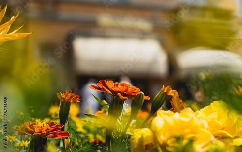 Beautiful urban flower arrangement , close up on Marigolds , Ghent , Belgium Wallpaper Mural