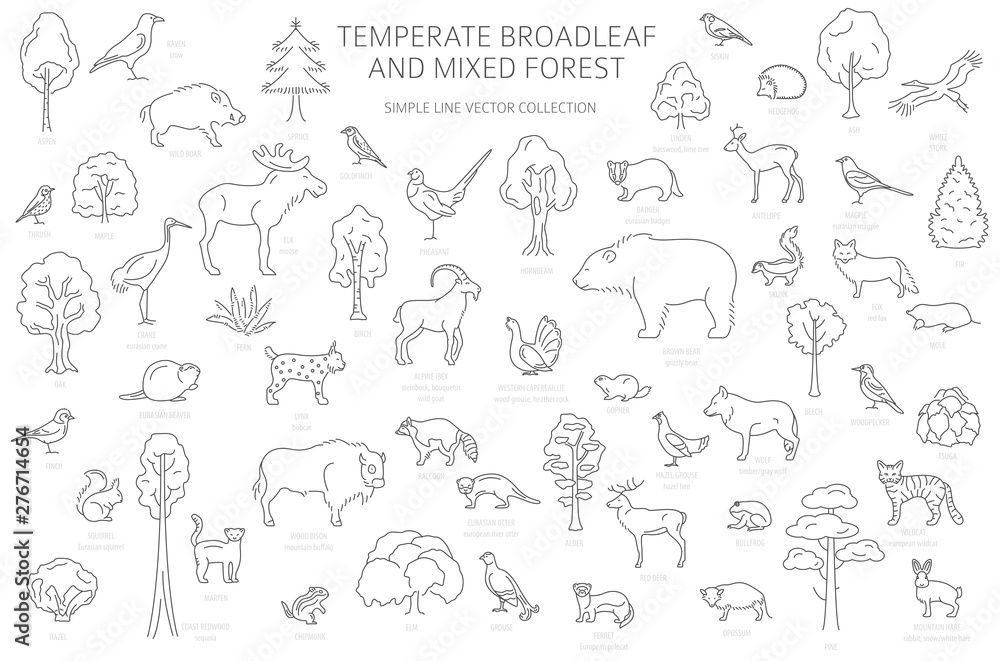 Fototapeta Temperate broadleaf forest and mixed forest biome. Terrestrial ecosystem world map. Animals, birds and plants set. Simple outline graphic design