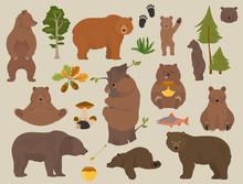 All Bear Species In One Set. B...