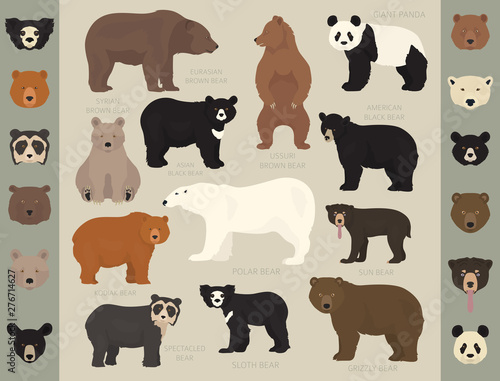 All world bear species in one set Canvas Print
