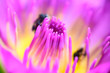 Leinwanddruck Bild - Close-up of pink lotus pollen.