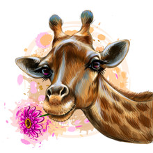Cute Giraffe With A Flower. Sticker On The Wall In The Form Of A Color Graphic, Hand-drawn Portrait Of A Giraffe Holding A Gerbera Flower In Its Mouth In A Watercolor Style.
