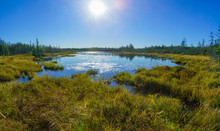 Caribou Plain, Fundy National Park