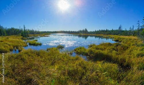 Caribou Plain, Fundy National Park Canvas