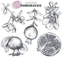 Vector Collection Of Pomegranate Fruits, Flowers, Branches.