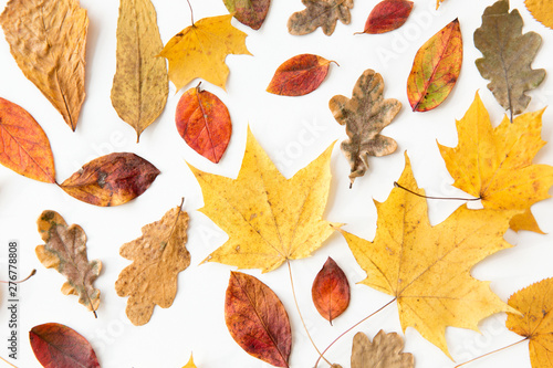 Poster Affiche vintage nature, season and botany concept - different dry fallen autumn leaves on white background