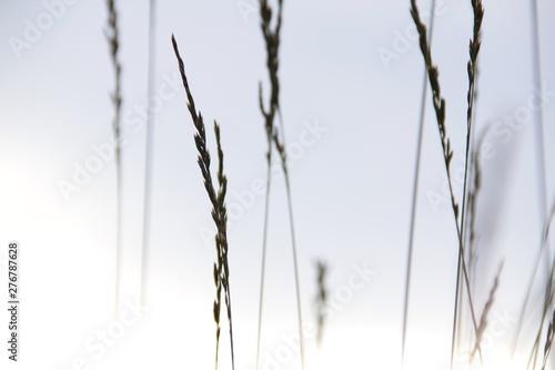 Tapety Minimalistyczne  trawa