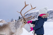 canvas print picture - Little girl feeding reindeer in winter