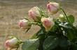 Róże I