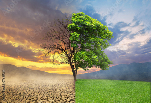 Tela Dead and alive tree in a split of crack wasted land and green meodow field a con