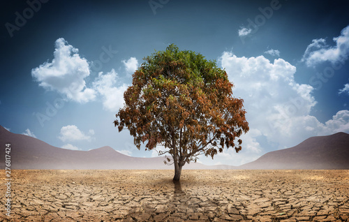 Dry cracked land with dead tree and sky in background a concept of climate change and global warming