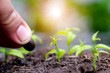 Hand of man planting a seed in soil agriculture. plants growing nature and reducing global warming concept