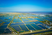 Aerial Image Of Large Shrimp Breeding Farms In The Coastal Region Of Giao Thuy, Vietnam.