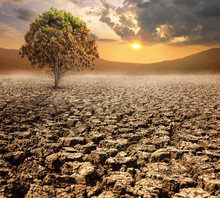 Lonely Brown Dead Tree In Dry Wasteland A Concept For Global Warming