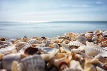 Sea Shells Lie On The Seashore...