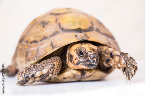 abstract, animal, art, background, blue, bright, color, colorful, design, graphic, green, illustration, ink, isolated, liquid, modern, paint, red, shape, splash, splatter, spring, texture, turtle, wat