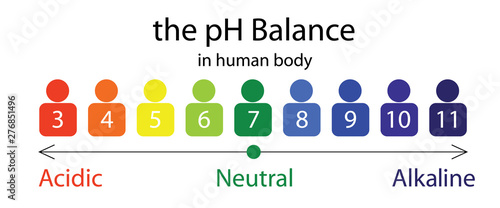 Photo The PH balance scale chart in a human body