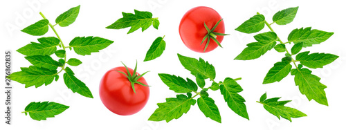 Leinwand Poster Tomato leaves isolated on white background with clipping path